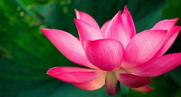 Cheongsam Bunga Teratai Mei Lien