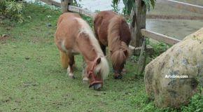 Santosa Stable Horse Riding, Kendal: Berkuda Dan Legenda